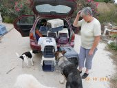 jan collecting 7 of the 30 rescue cats