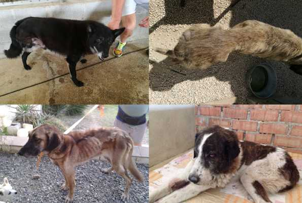 Animals In Distress helping Stray, Abandoned Dogs & Cats