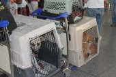 4 rescue dogs flying from malaga airport