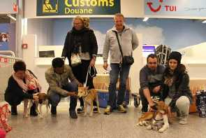 3 rescued pups land in Holland