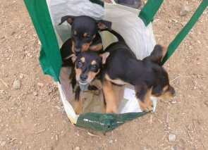 bag with 3 abandoned pups