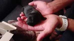 5 day old  abandoned pups