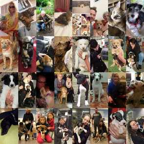 85 animals homed in 6 months