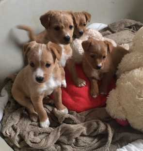 elly and her pups were abandoned