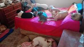 AID long tem dogs taking over my bed